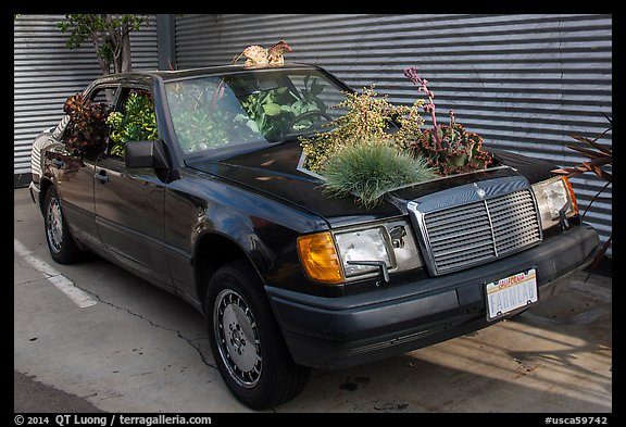 Plants growing out of Mercedes car, Bergamot Station. Santa Monica, Los Angeles, California, USA (color)