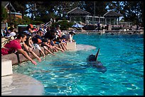 People reaching for dolphin, Dolphin Point. SeaWorld San Diego, California, USA ( color)