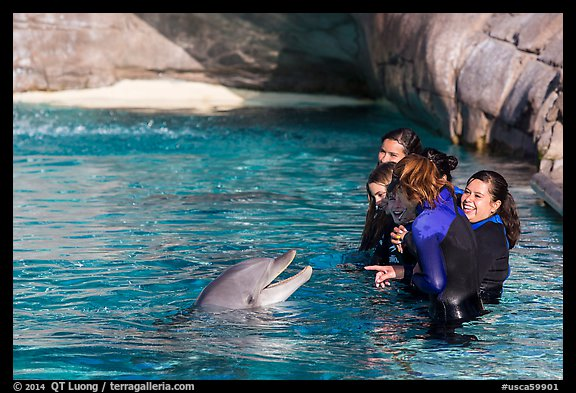 Guests interact with dolphin. SeaWorld San Diego, California, USA (color)