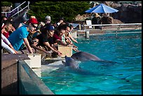 Guests petting dolphins. SeaWorld San Diego, California, USA ( color)