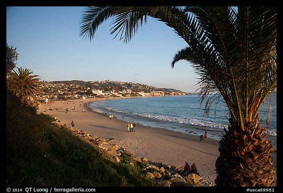 Beach framed by palm tree. Laguna Beach, Orange County, California, USA (color)