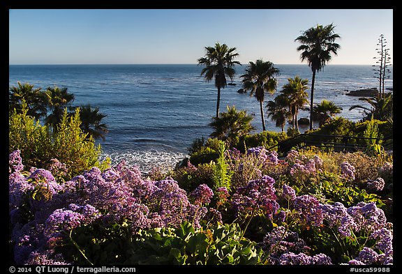 Picture Photo Flowers Palm Trees And Ocean Laguna