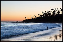 Beach at sunset with silhouettes of palm trees and beachgoer. Laguna Beach, Orange County, California, USA ( color)