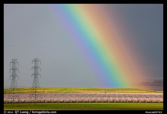 Rainbow, orchard in bloom, and power lines. California, USA (color)