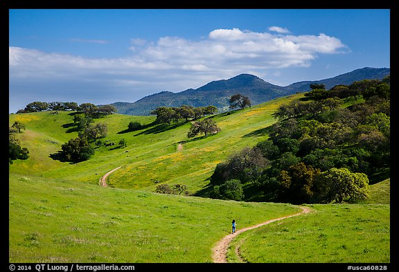 Trail winding on verdant hills, Pacheco State Park. California, USA (color)