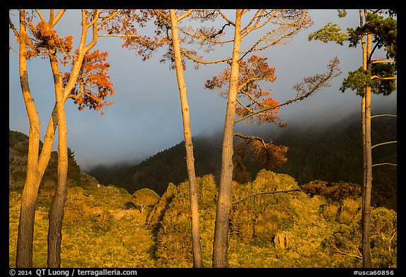 Trees in sunlight and hills in fog, Los Padres National Forest. Big Sur, California, USA (color)
