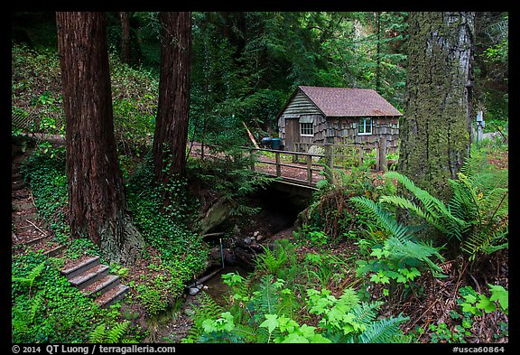 Cabin in the redwood forest. Big Sur, California, USA (color)