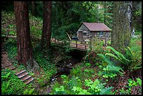 Cabin in the redwood forest. Big Sur, California, USA ( color)