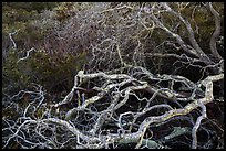 Branches. California, USA ( color)