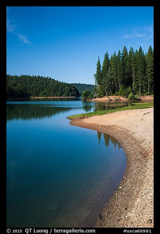 Lakeshore and pines, Jenkinson Lake. California, USA (color)