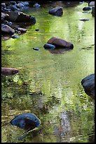 Boulders and green foliage reflection in river. California, USA ( color)