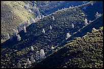 Hills and trees, Merced River Canyon. California, USA ( color)