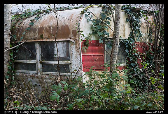 Overgrown trailer, Klamath. California, USA (color)