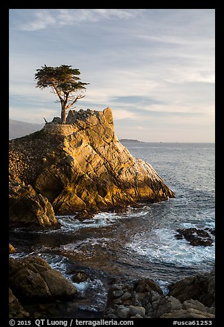 Lone Cypress. Pebble Beach, California, USA (color)