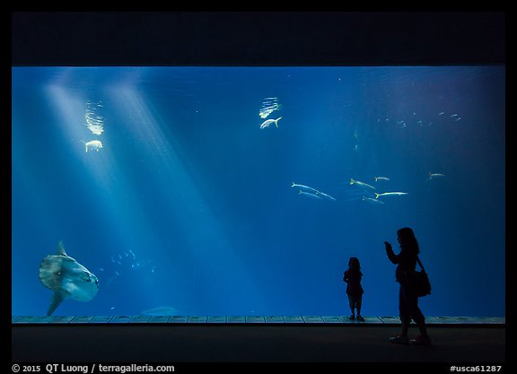Mother and girl in front of huge fish tank, Monterey Bay Aquarium. Monterey, California, USA (color)
