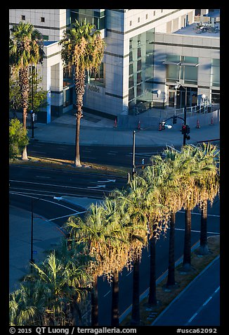 Palm trees, and street from above. San Jose, California, USA (color)
