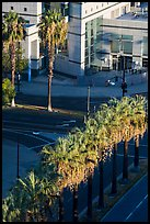 Palm trees, and street from above. San Jose, California, USA ( color)