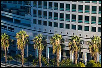 Palm trees, and Adobe building from above. San Jose, California, USA ( color)