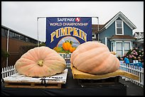 Giant pumpkins contest. Half Moon Bay, California, USA ( color)