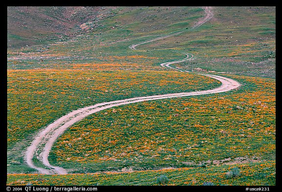 Curving unpaved road, hills W of the Preserve. Antelope Valley, California, USA (color)