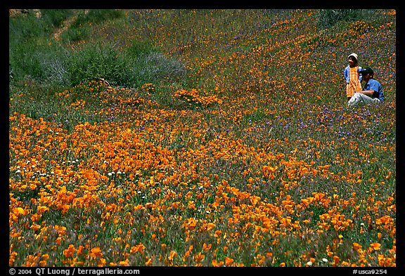 Man and girl in a wildflower field. Antelope Valley, California, USA (color)