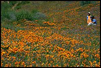 Man and girl in a wildflower field. Antelope Valley, California, USA
