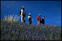 Family strolling in a field of lupines. Antelope Valley, California, USA (color)