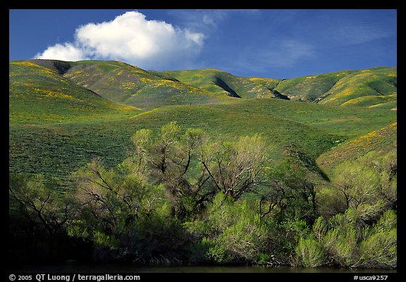 Pond, trees, and Gorman Hills. California, USA