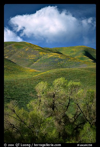 Trees, verdant hills,  Gorman Hills. California, USA (color)