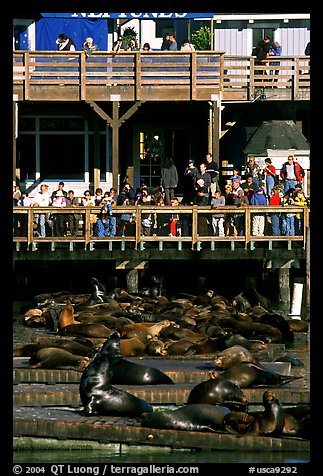 Tourists watching Sea Lions at Pier 39, afternoon. San Francisco, California, USA (color)