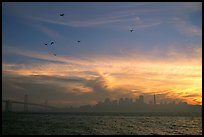 City skyline with sunset clouds and flying seabirds seen from Treasure Island. San Francisco, California, USA (color)