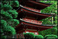 Pagoda, Japanese Garden, Golden Gate Park. San Francisco, California, USA (color)