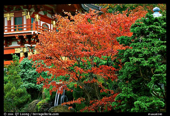 Red maple and pagoda detail, Japanese Garden, Golden Gate Park. San Francisco, California, USA