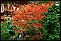 Red maple and pagoda detail, Japanese Garden, Golden Gate Park. San Francisco, California, USA (color)