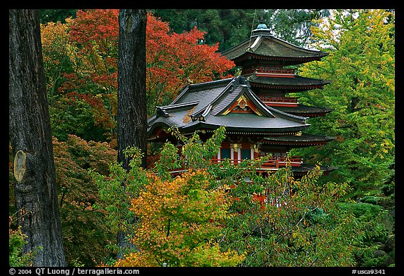 Picture photo pagoda amidst trees in fall colors for Japanese garden colors