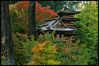 Pagoda amidst trees in fall colors, Japanese Garden, Golden Gate Park. San Francisco, California, USA (color)