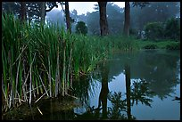 Pond reflections in fog, Golden Gate Park. San Francisco, California, USA ( color)