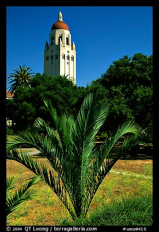 Hoover tower. Stanford University, California, USA (color)