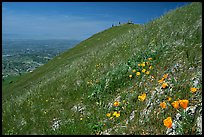 Wildflowers near  the summit of Mission Peak, Mission Peak Regional Park. California, USA (color)