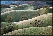 Ridges, Joseph Grant County Park. San Jose, California, USA (color)