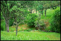 Meadow with flowers,  creek, and trees in spring, Mt Diablo State Park. California, USA (color)