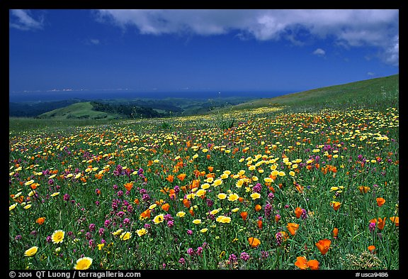 Meadows in the spring, with the Pacific ocean in the distance,  Russian Ridge Open Space Preserve. Palo Alto,  California, USA (color)