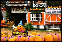 Pastorino pumpkin farm. Half Moon Bay, California, USA (color)