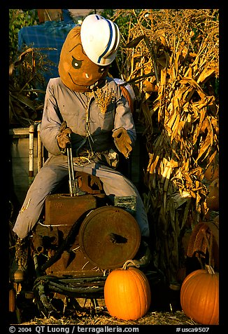 Scarecrow, Pumpkin patch. San Jose, California, USA (color)