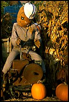 Scarecrow, Pumpkin patch. San Jose, California, USA ( color)