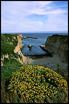 Wildflowers and cliffs, Wilder Ranch State Park, afternoon. California, USA ( color)