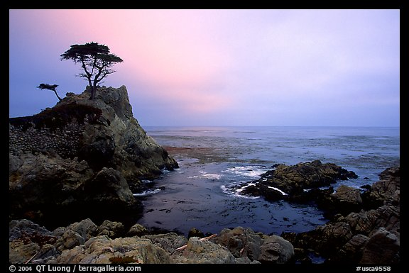 Lone Cypress, cloudy sunset, seventeen-mile drive. Pebble Beach, California, USA (color)
