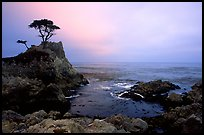Lone Cypress, sunset, seventeen-mile drive, Pebble Beach. Pacific Grove, California, USA