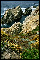 Pinnacle Cove and wildflowers. Point Lobos State Preserve, California, USA