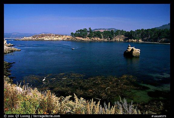 Whalers cove. Point Lobos State Preserve, California, USA (color)